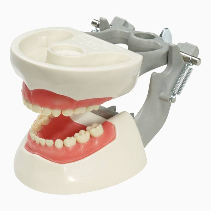 Pediatric Dentoforms