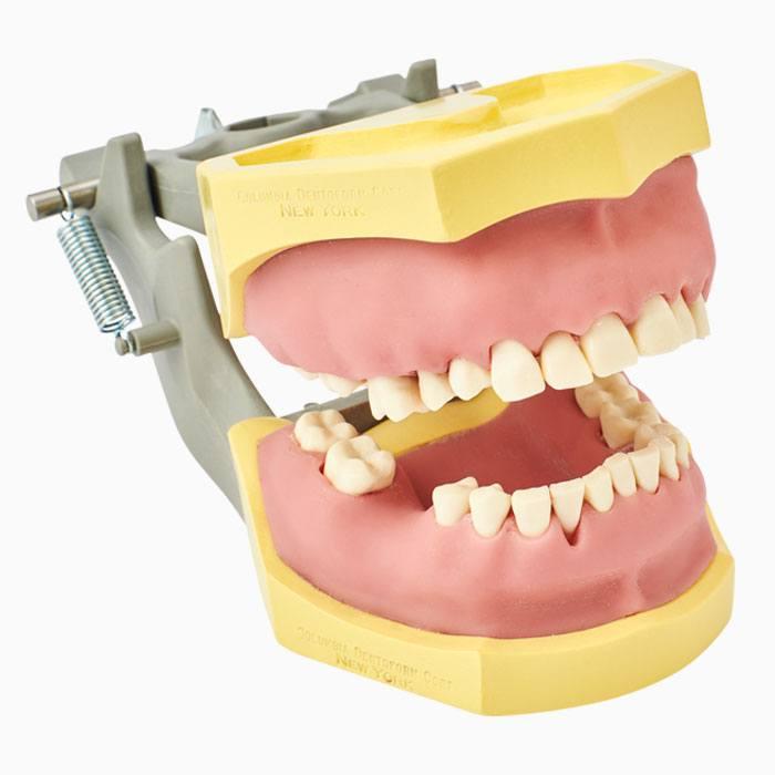 Periodontal Dentoform