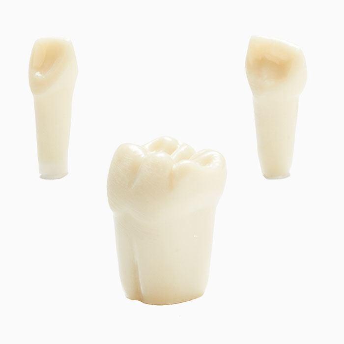 760 Series Simulation Pedodontic Teeth