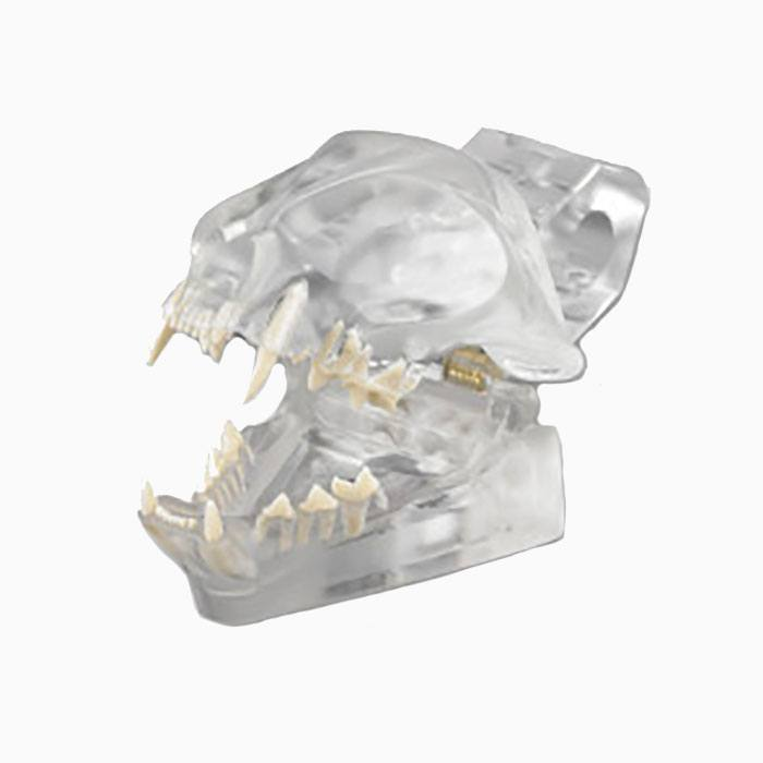 CTD Articulated Clear Feline Model