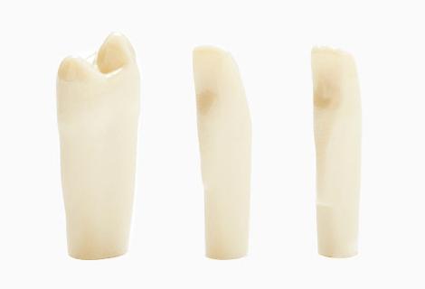 Simulation teeth